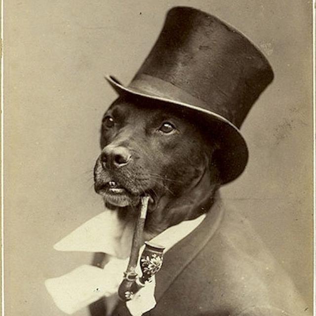 Cotswolds Gentleman